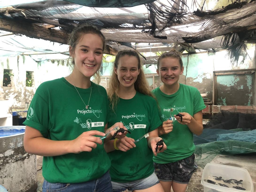 Project Abroads ungdomsvolontärer rengör skalen på sköldpaddsungar med en tandborste på vårt havsköldpaddsprojekt i Mexiko